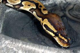 Schlangen im Biologieunterricht